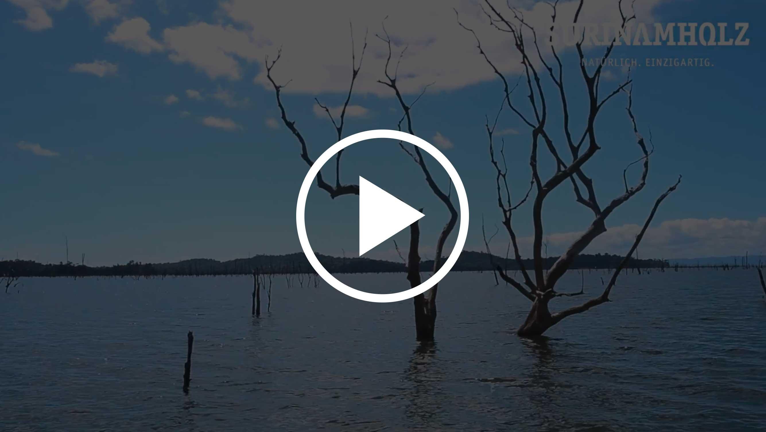 surinamholz der schatz aus dem stausee youtube holzland beese - Tanimbuca: Die Geheimwaffe für Deine Terrasse